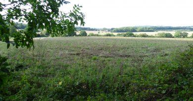 Crash Site, Ightham, Kent